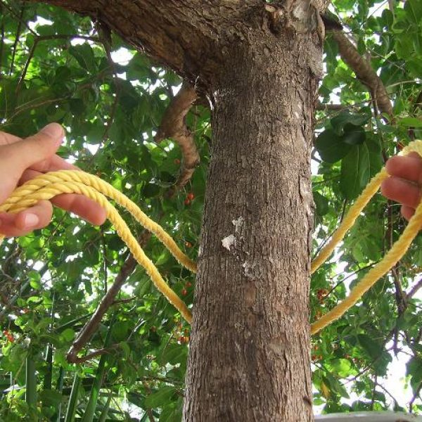 noeud pour attacher un hamac a un arbre